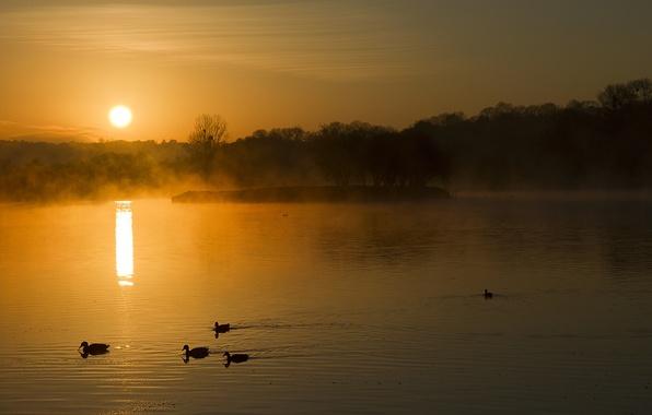 Картинка лес, туман, озеро, рассвет, утки