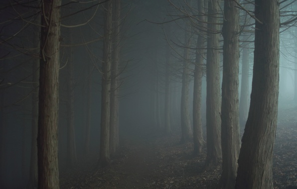 Картинка дорога, туман, мрак, Лес, сумерки, тропинка