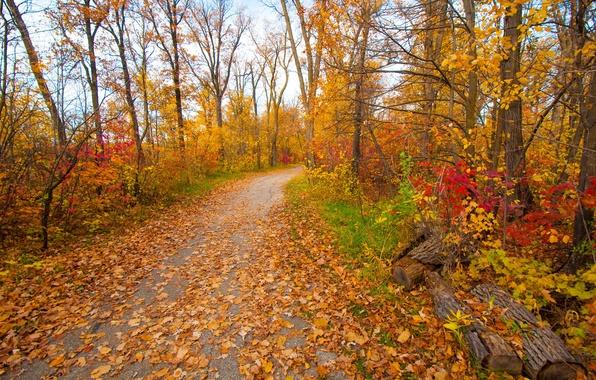 Картинка грусть, осень, листья, деревья, парк, настроение, сад, дорожка, багрянец