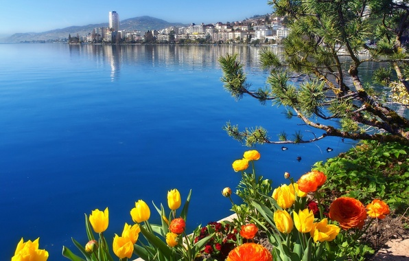Картинка цветы, озеро, Швейцария, Switzerland, Женевское озеро, Монтрё, Lake Geneva, Montreux