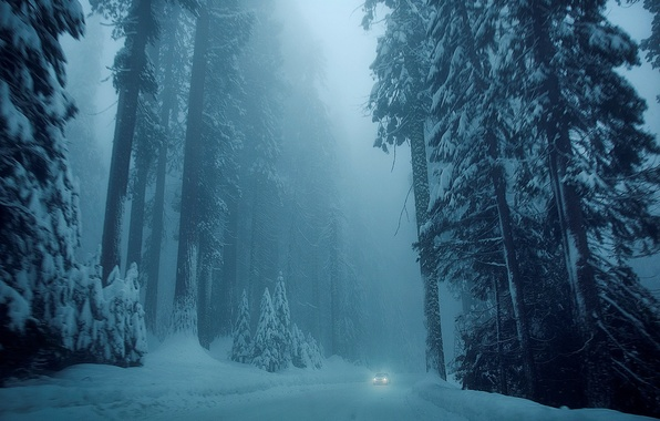 Картинка холод, зима, дорога, car, машина, снег, деревья, природа, фон, дерево, обои, елки, wallpaper, white, автомобиль, …