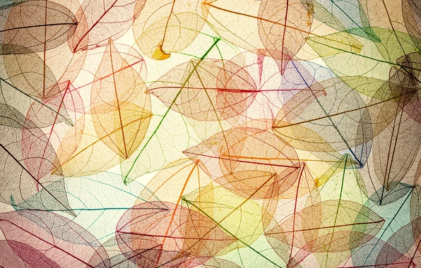Картинка листья, фон, colorful, abstract, autumn, leaves, осенние, transparent