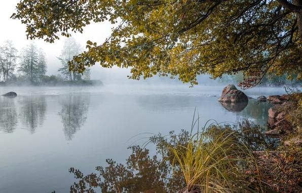 Картинка осень, лес, туман, озеро, пруд, камни, рассвет, утро