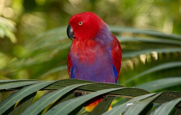 Картинка ветки, пальма, птица, листва, попугай