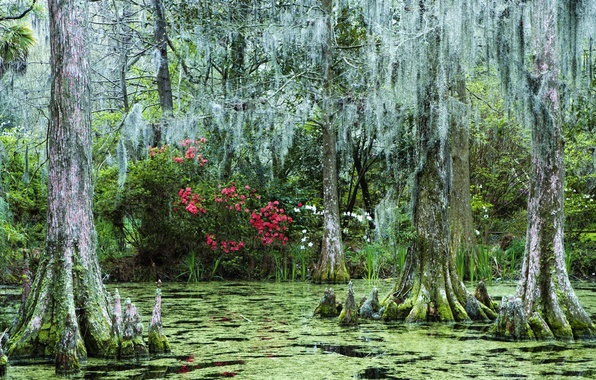 Картинка лес, цветы, болото, затонувший