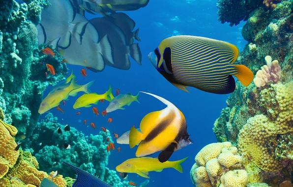 Картинка море, океан, рыба, под водой, underwater, sea, ocean, fish, коралловый риф, coral reef