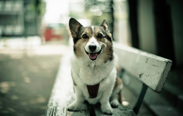 Картинка взгляд, собака, скамья
