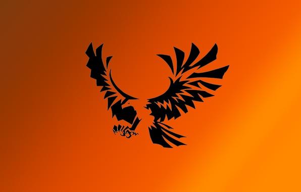 Орел белоголовый орлан фото картинка