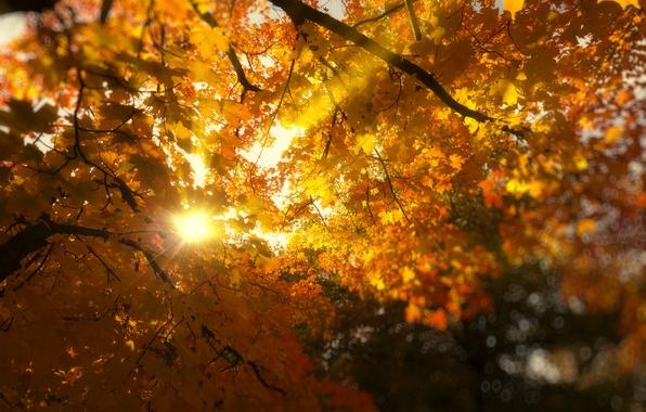 Картинка листья, солнце, лучи, свет, деревья, ветки, природа, листва, Осень, желтые