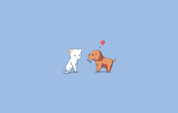 Картинка кошка, животные, любовь, подарок, собака, рыба, love, голубой фон