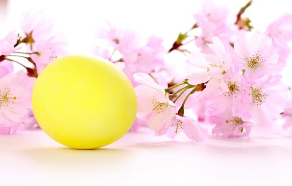 Картинка цветы, праздник, пасха, вишневая веточка, желтое яичко