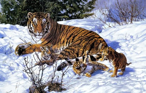 Картинка зима, снег, арт, тигры, тигрица, тигрята, John Banovich
