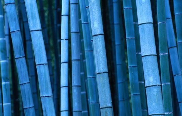 Картинка бамбук, Япония, Japan, Kinki, Кинки, Kyoto, Bamboo, Киото
