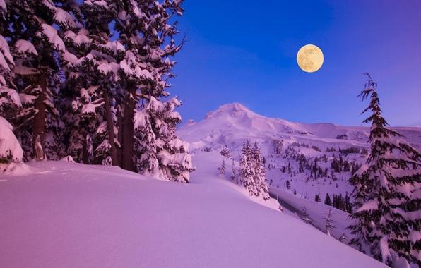 Картинка зима, снег, деревья, горы, ночь, природа, луна, месяц, леса