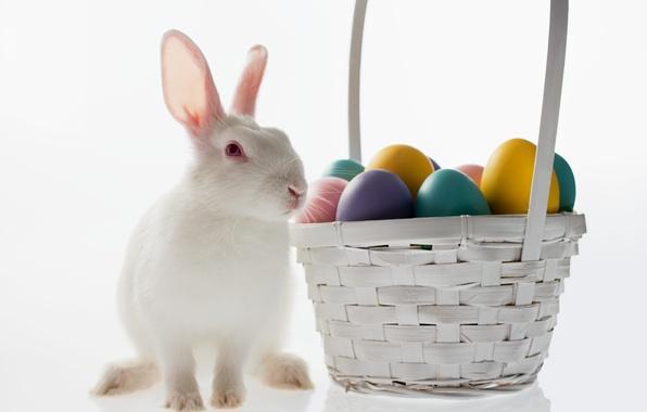 Картинка корзина, яйцо, кролик, пасха, easter