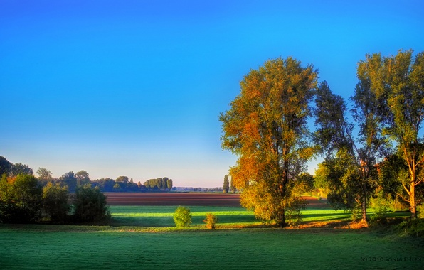Картинка осень, деревья, поля, утро