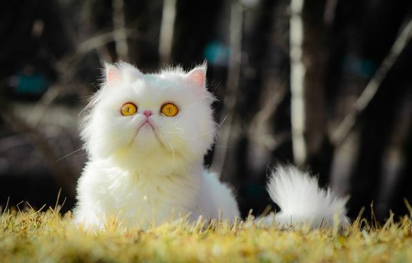 Картинка трава, глаза, кот, grass, eyes, cat, боке, bokeh, желтые глаза, yellow eyes