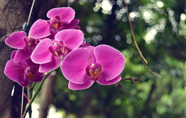 Картинка дерево, листва, ветка, орхидеи, цветки, боке