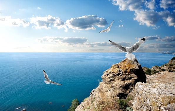 Чайки фото на море