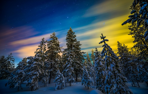 Картинка зима, лес, снег, деревья, северное сияние, Финляндия, Finland, Lapland, Лапландия