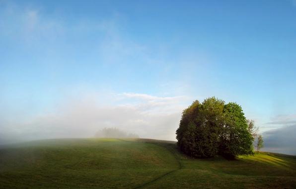 Картинка поле, лето, деревья, туман