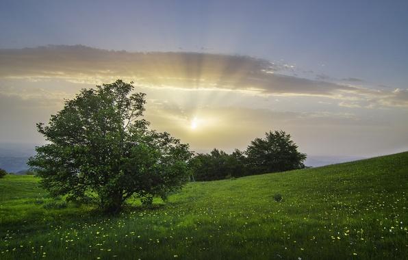 Картинка деревья, луг, Италия, кусты, Italy, Болоньола, Marche, Bolognola