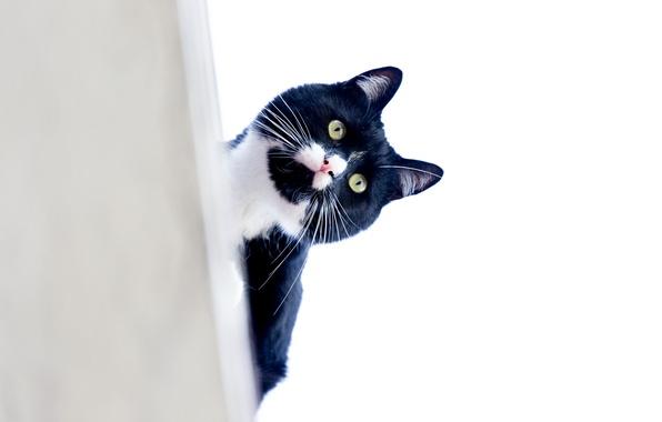 Картинка кот, усы, взгляд, котэ