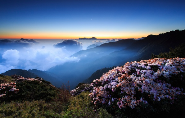 Картинка небо, облака, закат, цветы, горы, ночь, туман, холмы, вечер, утро