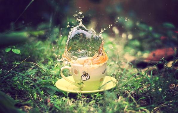Картинка зелень, лето, трава, макро, брызги, земля, green, чай, чашка, блюдце