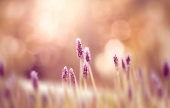Картинка зелень, поле, трава, цветы, природа, фон, обои, размытие, луг, wallpaper, цветочки, широкоформатные, flowers, background, полноэкранные, …