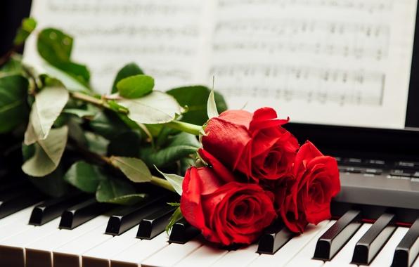 Картинка ноты, розы, клавиши, красные, пианино
