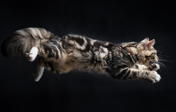 Картинка кот, фон, прыжок, котэ