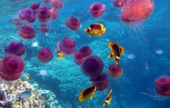 Картинка море, рыбы, океан, кораллы, медузы, подводный мир