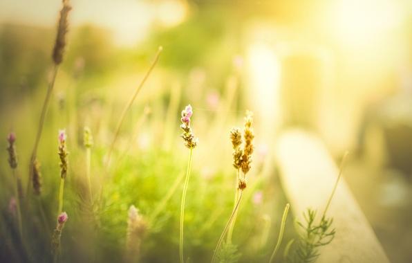 Картинка зелень, поле, лето, трава, цветы, фон, обои, размытие, весна, утро, луг, день, wallpaper, flower, широкоформатные, …