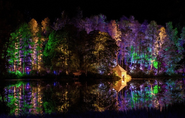Картинка лес, деревья, ночь, огни, парк, домик