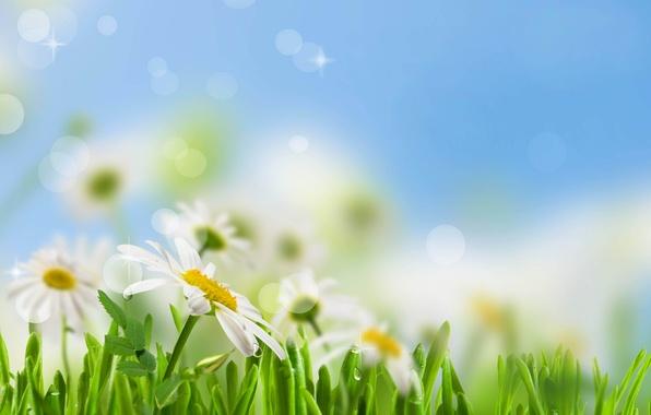 Картинка небо, трава, листья, капли, цветы, свежесть, роса, green, ромашки, красота, весна, размытость, white, grass, белые, …