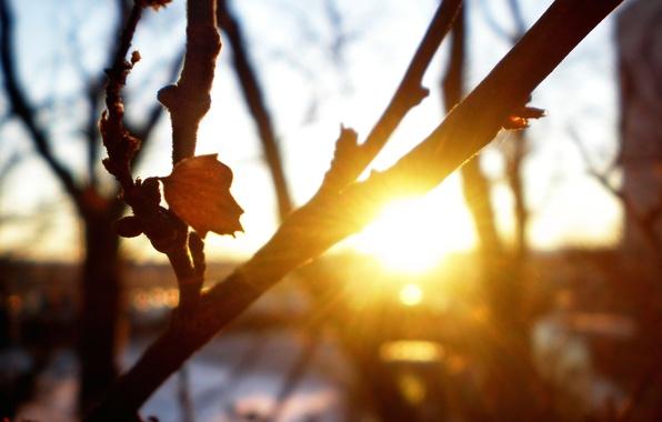 Картинка осень, макро, лучи, деревья, закат, свежесть, ветки, природа, лист, прохлада, солнца