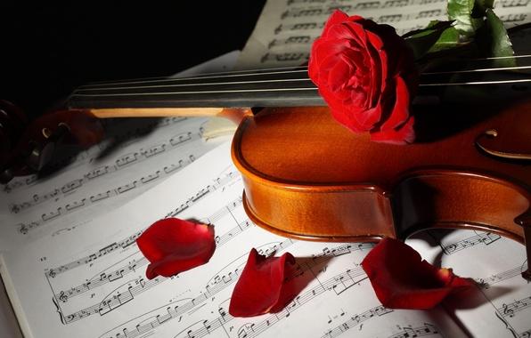 Картинка цветы, ноты, скрипка, розы, лепестки