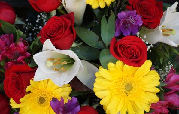 Картинка краски, роза, тюльпан, букет, лепестки, гербера