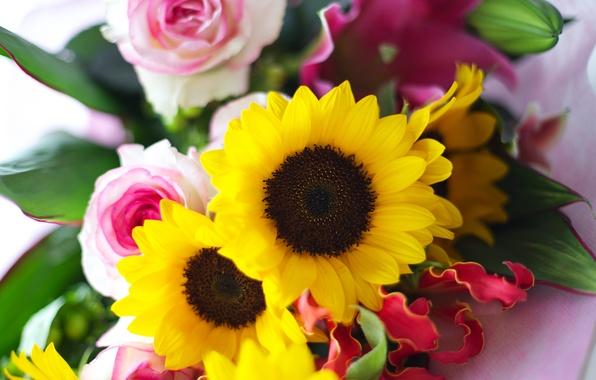 Картинка листья, подсолнухи, цветы, розы, букет, желтые, лепестки, розовые