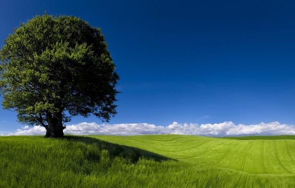 Картинка Landscape, Cardiff, Green Horizons, Fields, Newpor