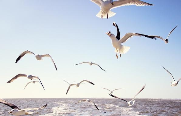 Картинка море, небо, вода, полет, птицы, чайки