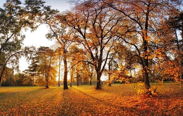 Картинка осень, листья, деревья, парк, landscape, nature, park, autumn, leaves, tree