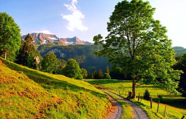 Картинка дорога, лето, горы, Швейцария, Альпы