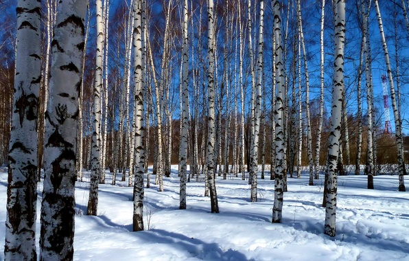Картинка небо, солнце, свет, снег, деревья, ветки, природа, синева, краски, красота, весна, тени, берёзы, роща