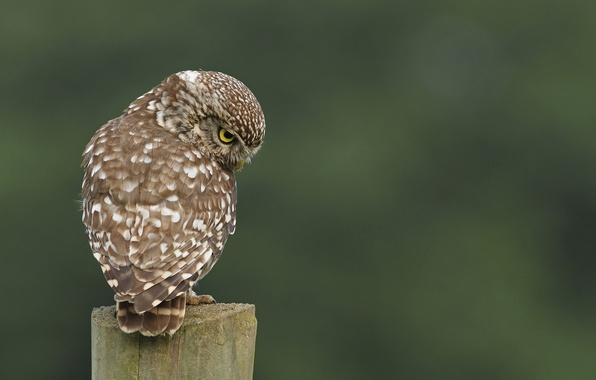 Картинка сова, птица, пень, спиной, в крапинку