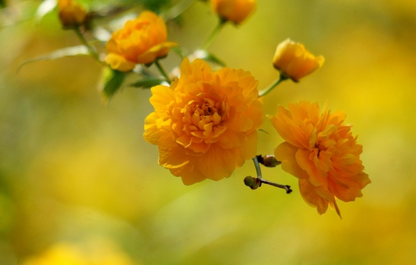 Картинка цветы, желтые цветочки, вена
