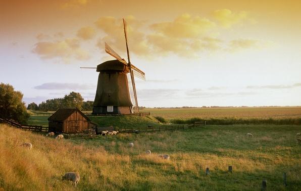 Картинка небо, трава, природа, мельница