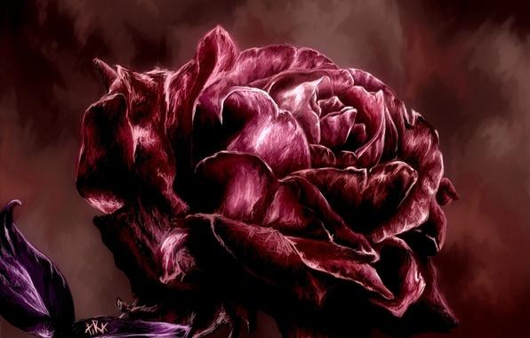 Картинка роза, лепестки, арт, живопись, красная