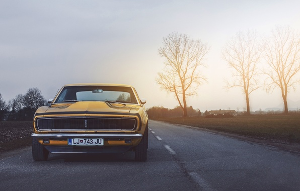 Картинка Chevrolet, Muscle, Camaro, USA, Car, Power, Front, Sun, Yellow, 1968, Oldy